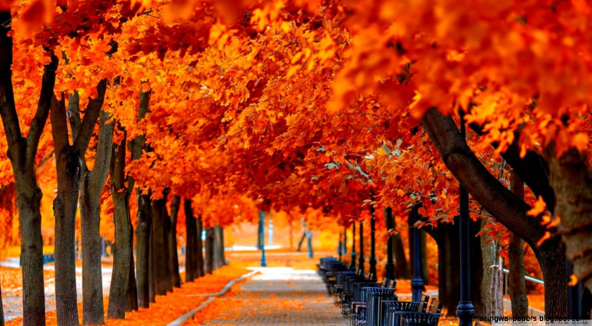 Orange Trees Fall HD desktop wallpaper  Widescreen  High