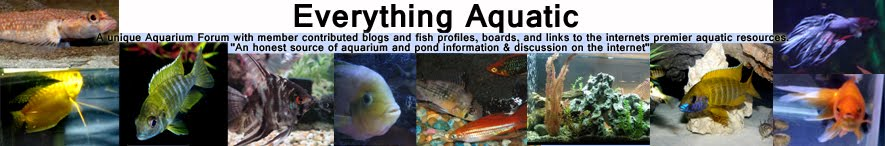 Everything Aquatic- Forum Board