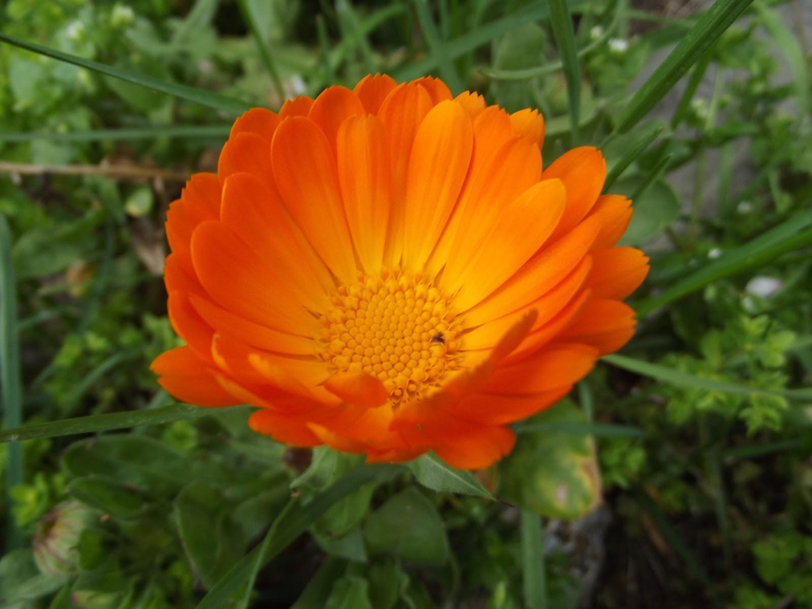 Fotos de flores Florpedia com