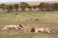 Chillin' on the Mara