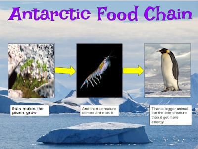 Isaac pt england school antarctic food chain for Antarctic cuisine