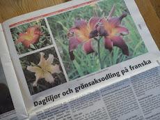 AnnonsNytt, Tjörn 3/2011