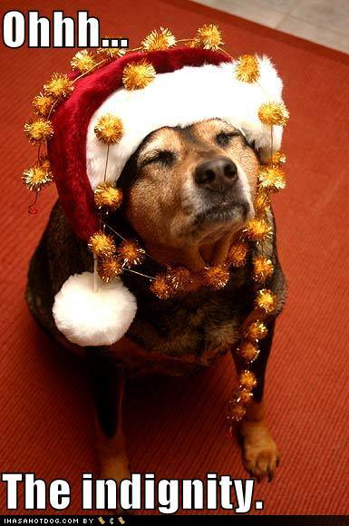 funny image collection christmas dog and funny christmas