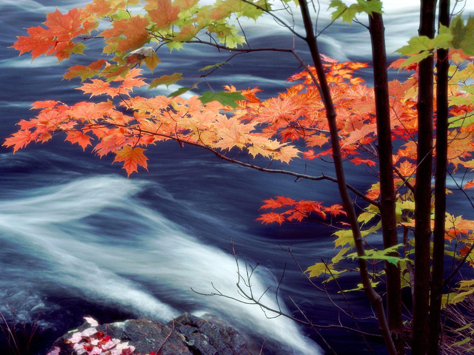 The best top autumn desktop wallpapers 26 En Güzel Sonbahar HD Duvar Kağıtları
