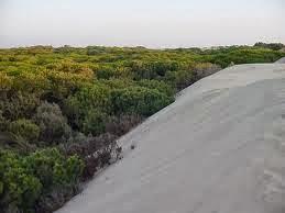 Los corrales - Doñana