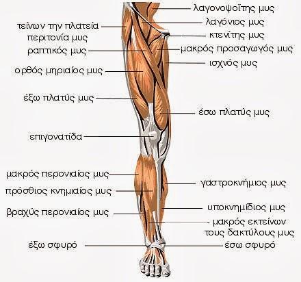 http://3.bp.blogspot.com/-wBzQwZofxVc/UmDfbNLHZZI/AAAAAAAAANQ/aSPN15IuMfQ/s1600/Anatomia_Physiologia+14.jpg