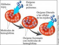 que es anemia
