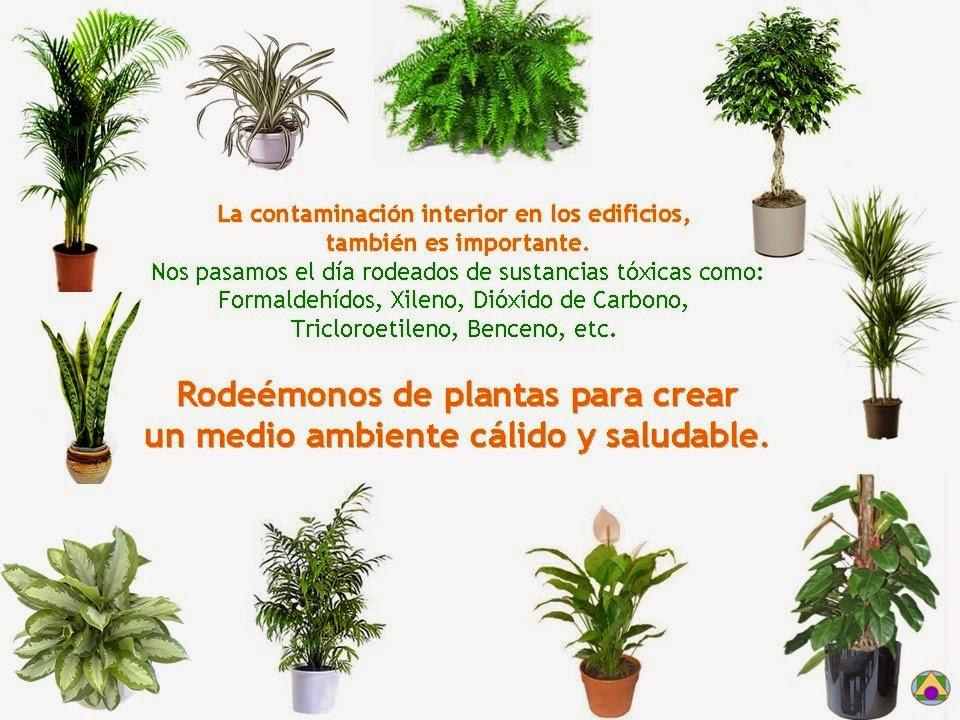 tipos de plantas y cactus