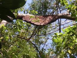 Madu Hutan Asli Riau