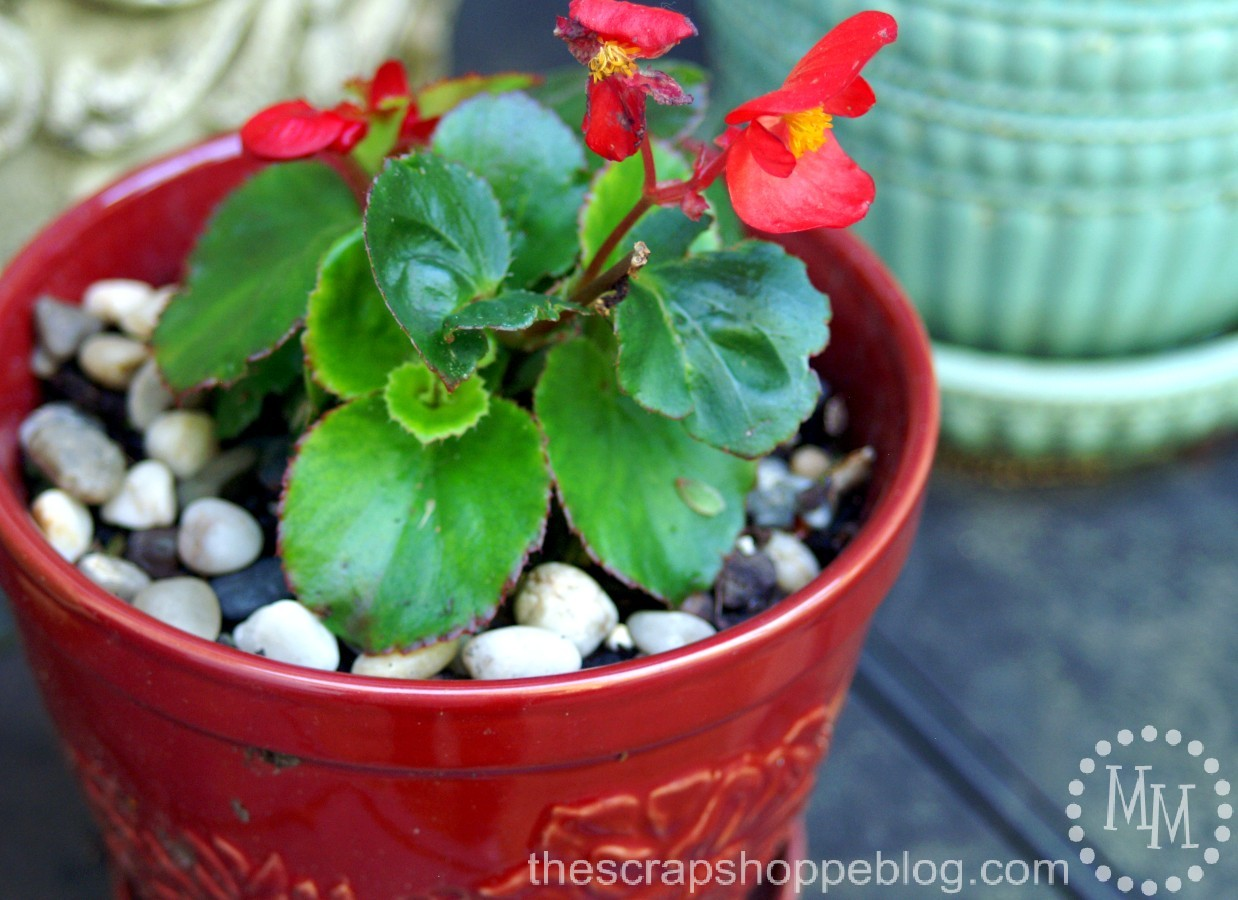 1 simple trick to water your potted plants less frequently the scrap shoppe - Seven tricks for healthier potted plants ...