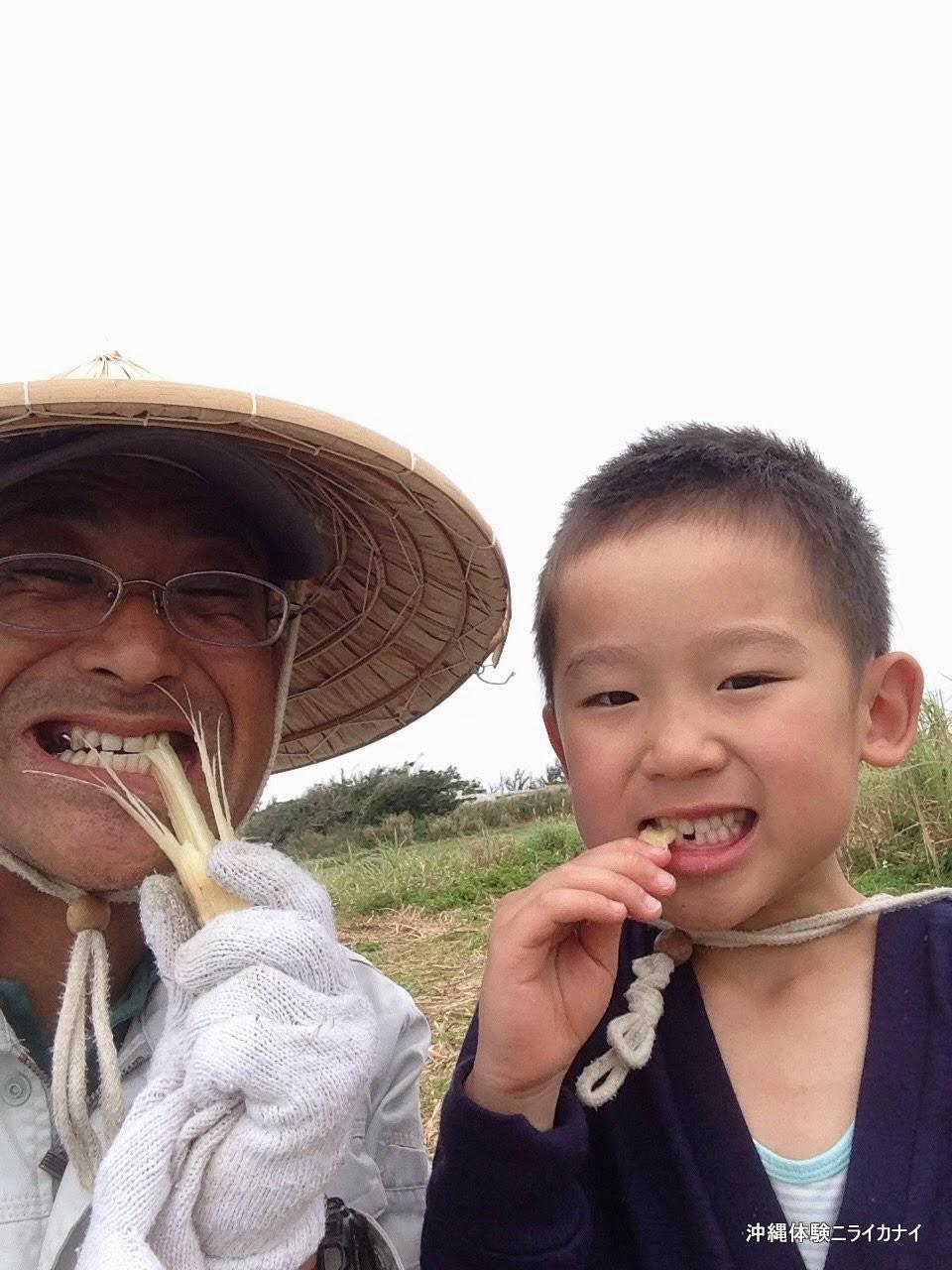 沖縄体験/観光 サトウキビ刈りと丸かじり