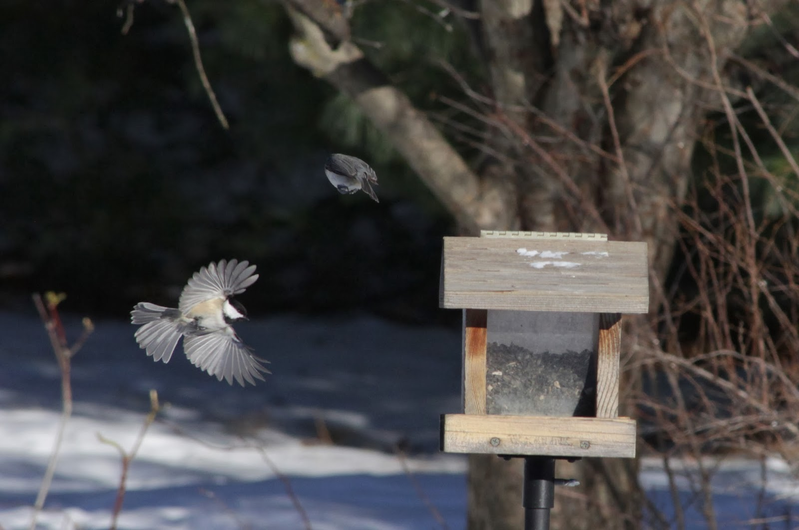 flying to the feeder one