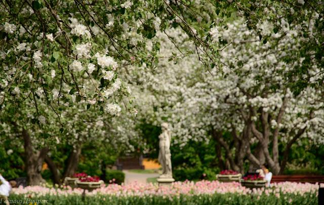 О жизни: Яблоневый сад фото