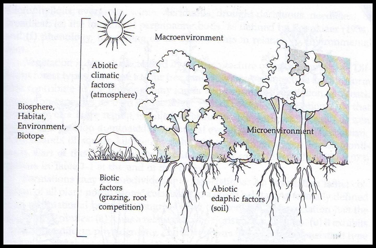 Tumbuhan dalam lingkungan &;jurnal belajar&;