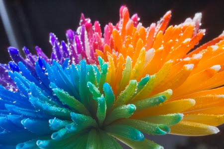 Beautiful Rainbow Flower Wallpaper