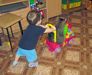 Катание кота, кот