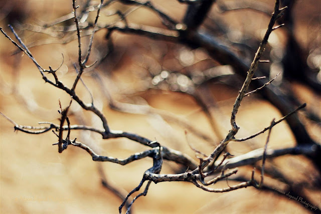 naked branches in golden light