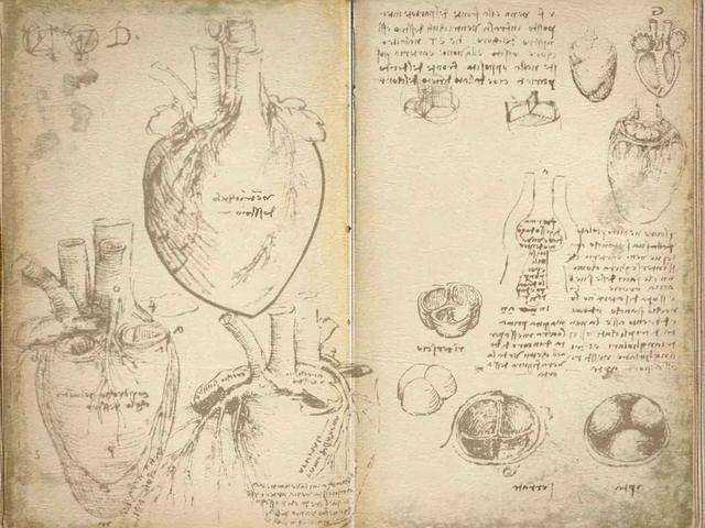 Leonardo Da Vinci Anatomist At The Royal Gallery Buckingham
