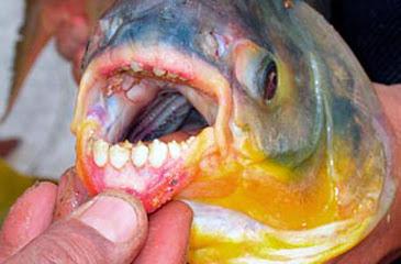 Significado dos Sonhos com Peixe