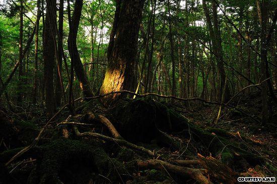 7 Tempat Wisata Paling Menakutkan di Dunia: Hutan Aokigahara - Gunung Fuji, Jepang