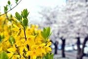ตารางดอกไม้บาน ปี 2017
