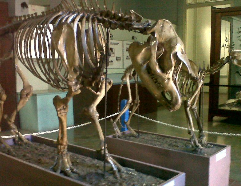 Tempat Wisata di Bogor Meseum Zoologi Bogor