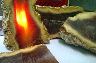 Bahan Batu Akik Raflesia