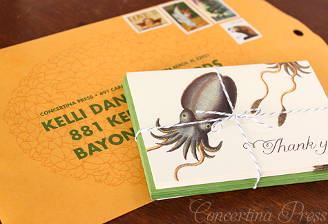 Cuttlefish Thank You Notes by Concertina Press