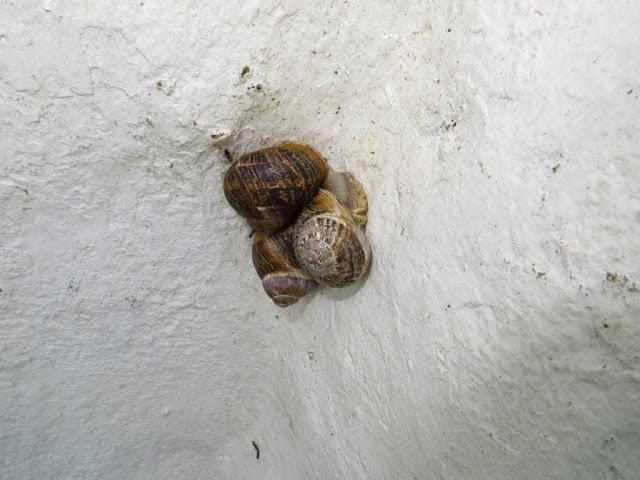 Fotografia de Caracóis dormindo na parede