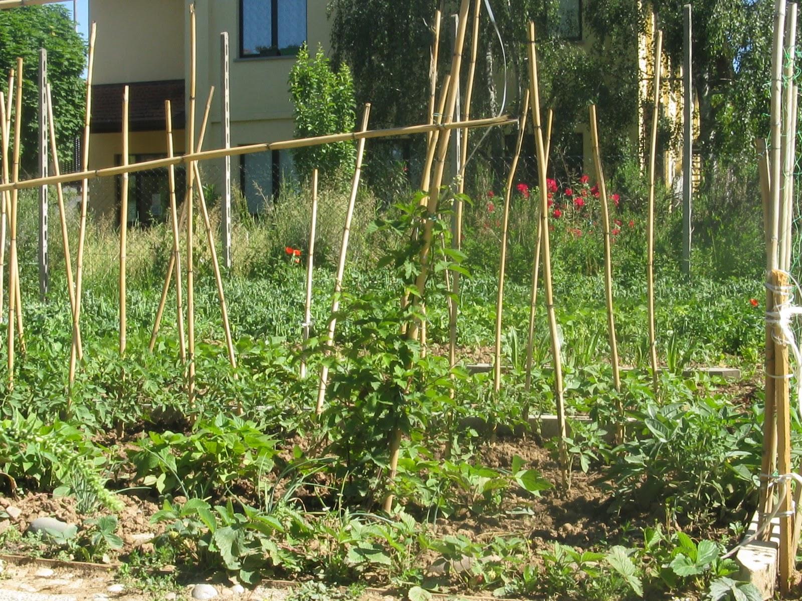 Orti e giardini ortoterapia coltivare la terra per for Piantare pomodori