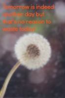 Dandelion seed clock