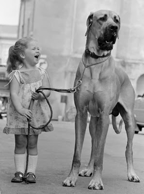 Amazing dogs bigger than their owners
