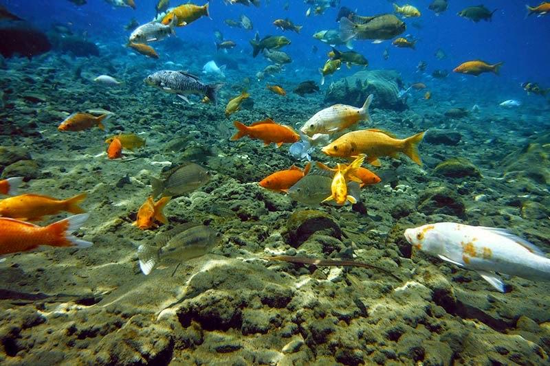Ikan Umbul Ponggok Klaten