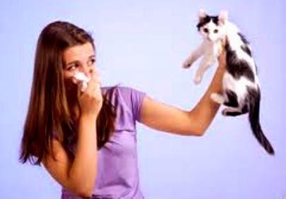 Cara Mudah Mencegah Alergi Bulu Kucing