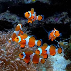 Mundo arrecife puebla for Peces de acuario marino