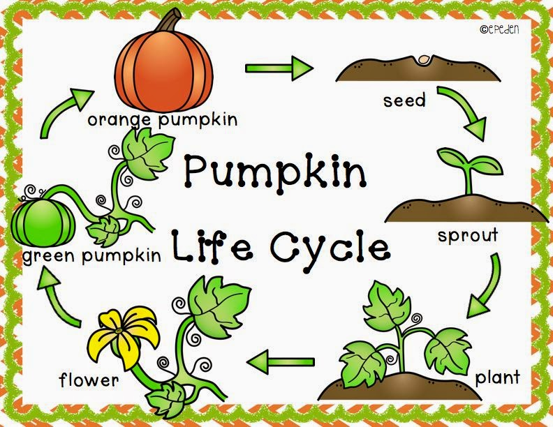 Modest image within pumpkin life cycle printable