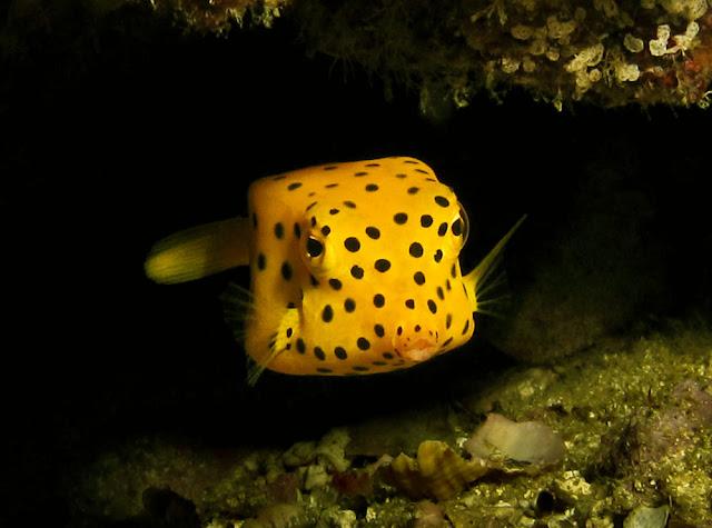 A yellow fantasy under the blue Ocean