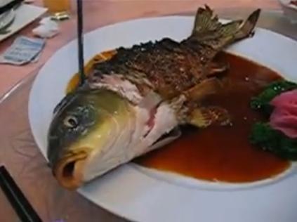 Ying-Yang-Fish.jpg