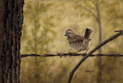 Song Sparrow Bird Painting in pastel by Canadian Wildlife Artist Colette Theriault