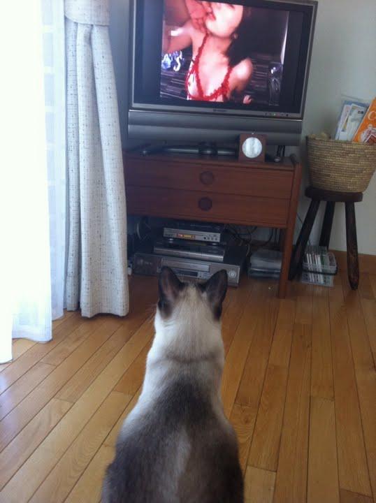Порно ролик fanny cats