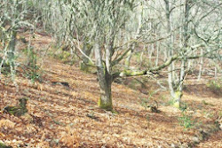 Senda verde del Agüeira (Oscos)