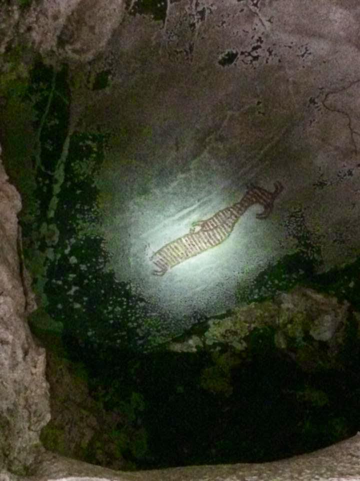 cave painting, prehistoric thailand ao luek caves kayaking krabi, crazy little family adventure