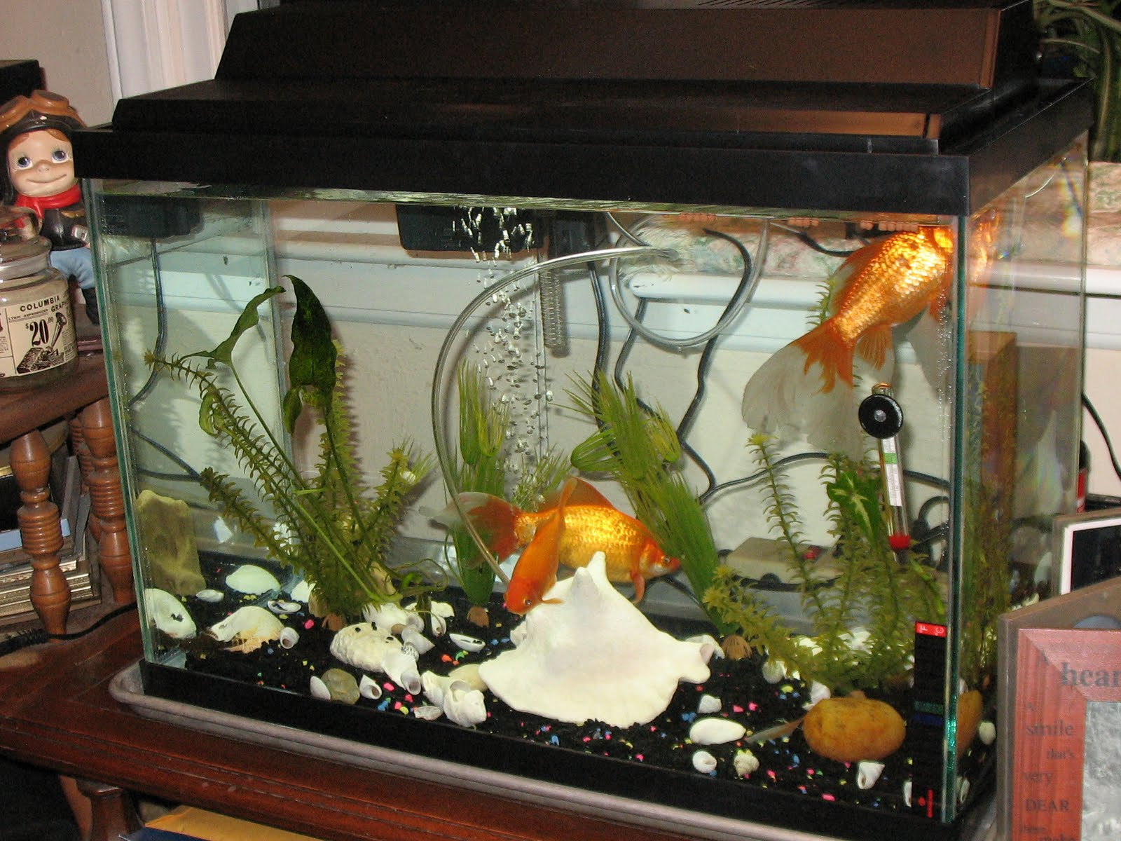 10 20 gallon fish tank hall of flowers 20 gallon fish for Fish for a 10 gallon tank
