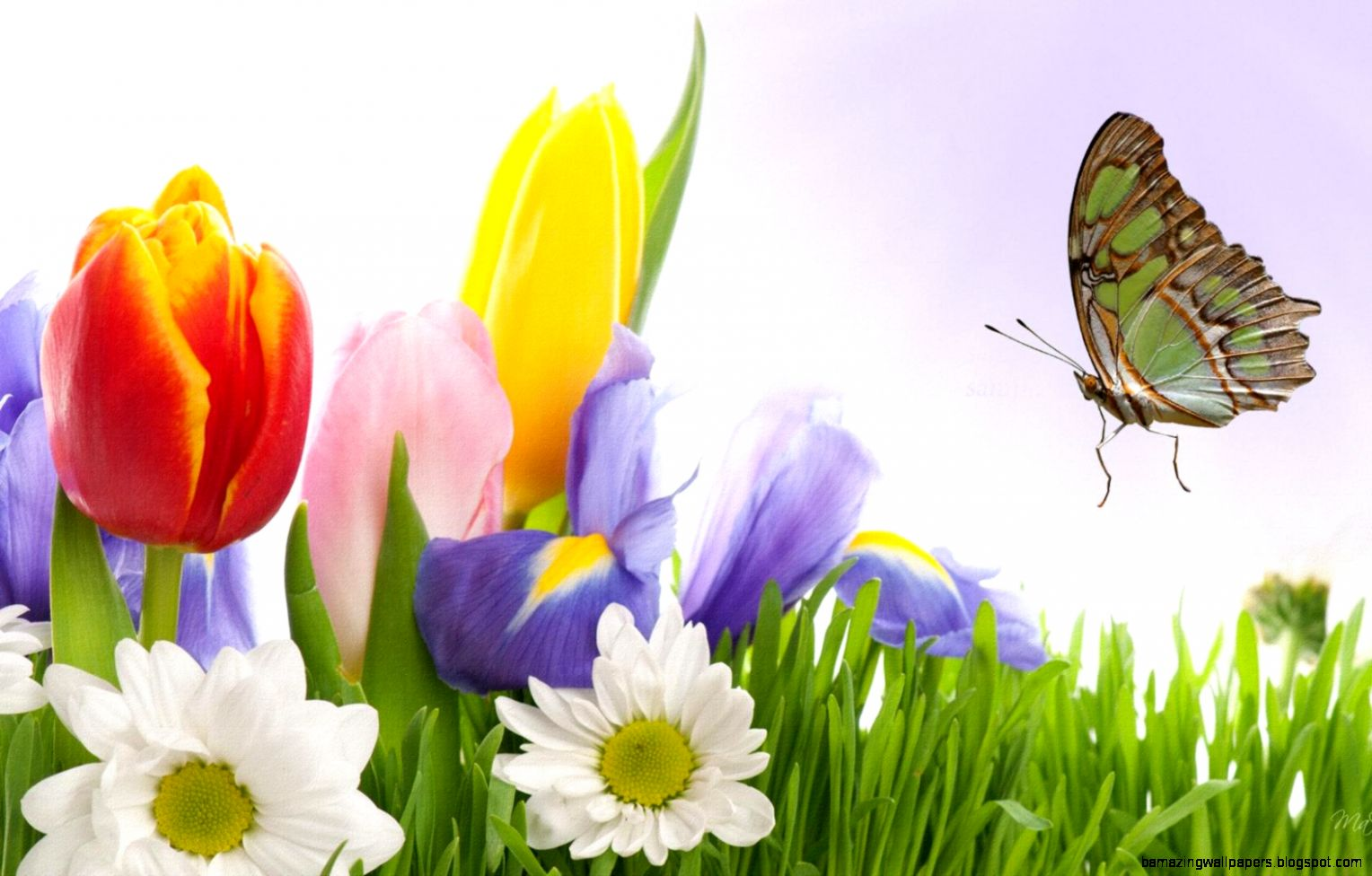 Spring Flowers And Butterflies  Pendulo