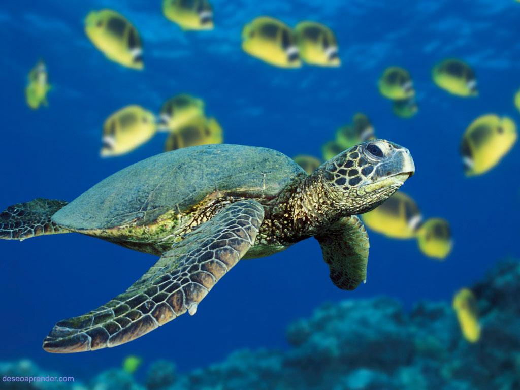 Caballito De Mar Fotos y Vectores gratis Freepik - imagenes de animales del agua