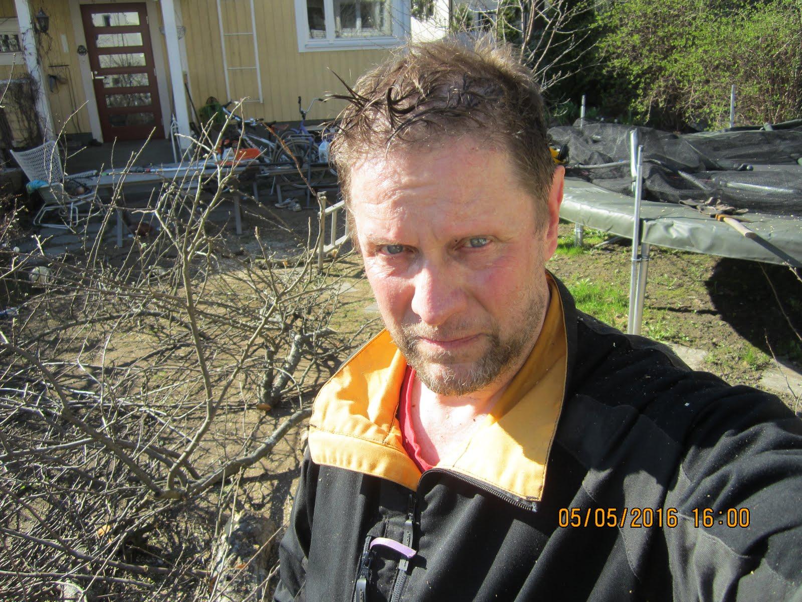 Pihapuiden kaadot, pensasaitojen ja ruohikoiden leikkaukset pihataikuri Olavi Lehto käteisellä
