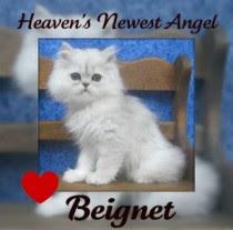 Forever, Beignet