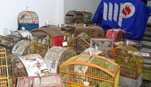 valenca-operacao-do-mp-ba-apreende-69-aves-silvestres