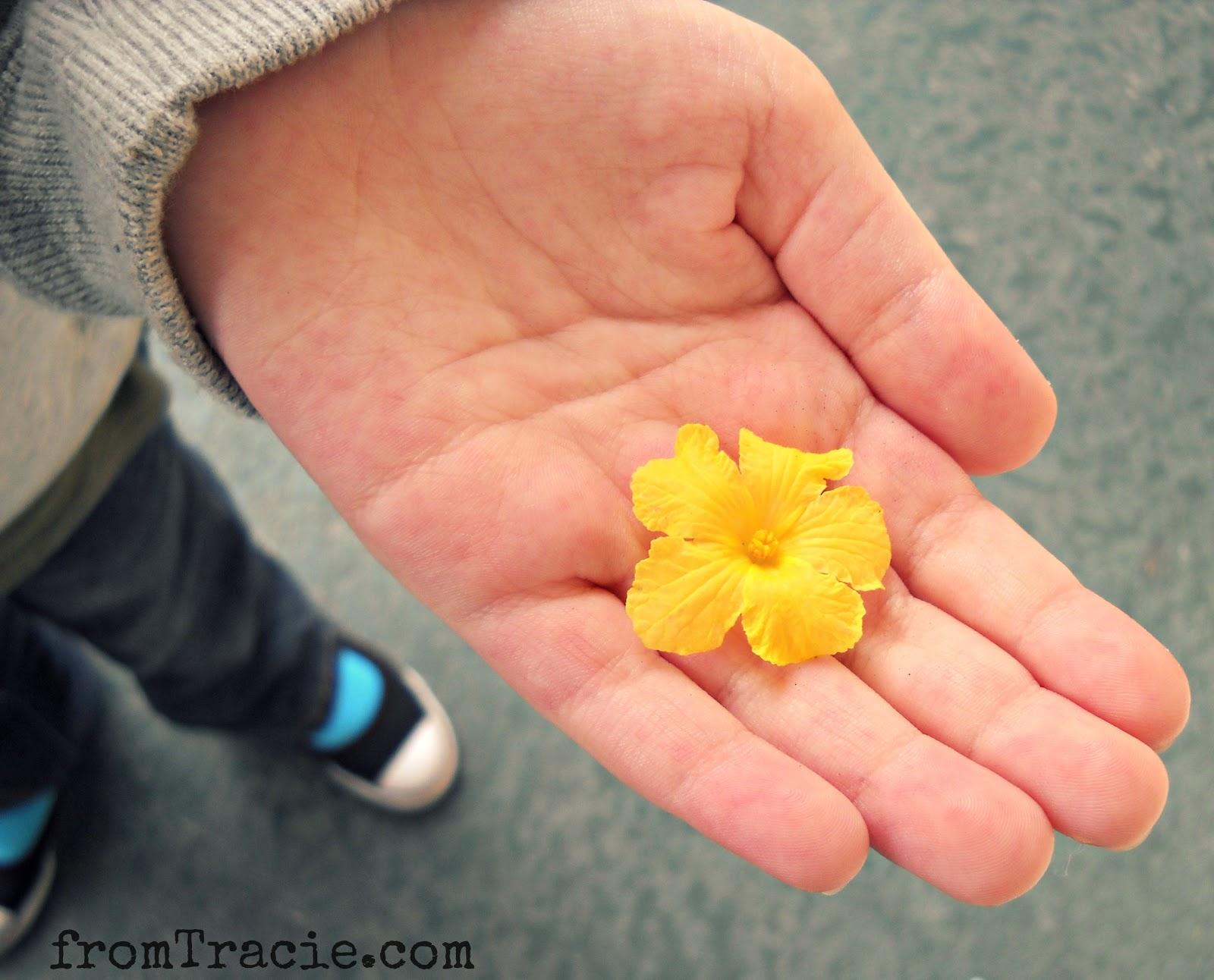 hand holding yellow flower