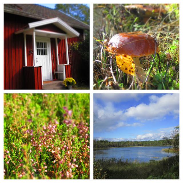 Rotes Schwedenhaus, Steinpilz, Erika und ein See in Schweden